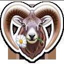 Аргали (алтайский горный баран)
