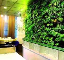 Вертикальное озеленение Новосибирск