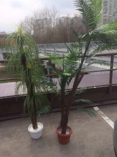 поставка деревьев через портал поставщиков