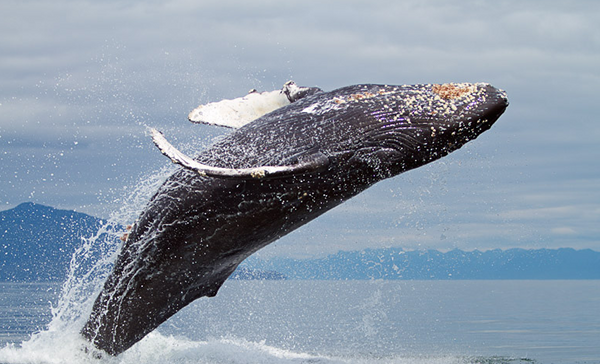 Иллюстрация к статье: 3 кита эффективной контекстной рекламы
