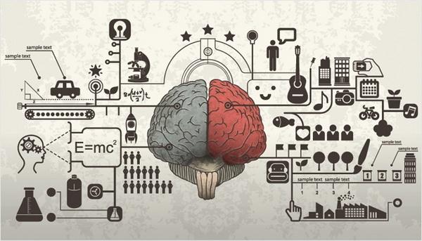 2 отдела мозга