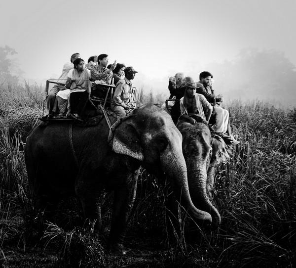Иллюстрация к статье: Путеводитель по мобильным джунглям