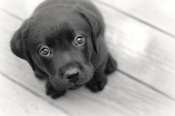Иллюстрация к статье: Дискриминация домашних животных, или Почему людям не нравятся черные собаки?