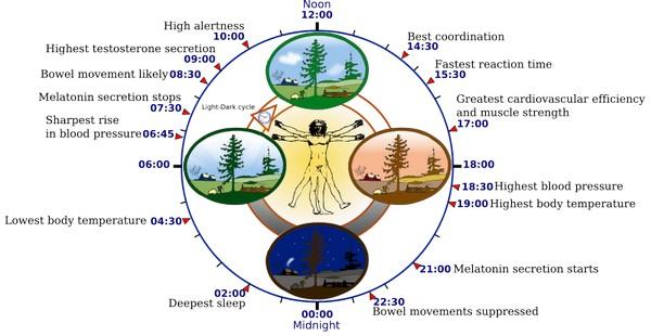 длина биологического цикла