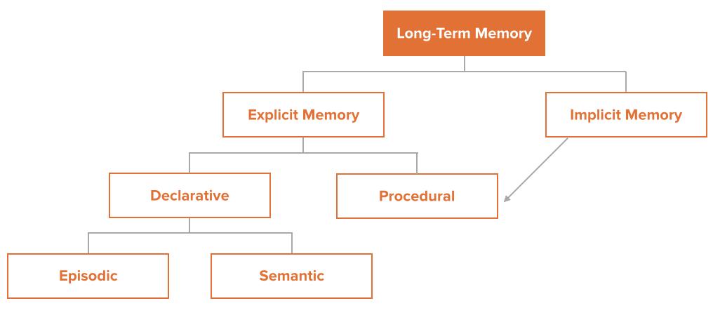 Структура долговременной памяти