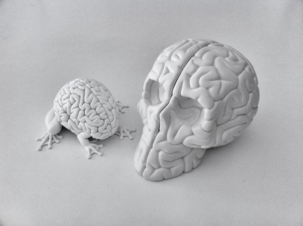 Иллюстрация к статье: 7 методов воздействия на «рептильный мозг» клиентов