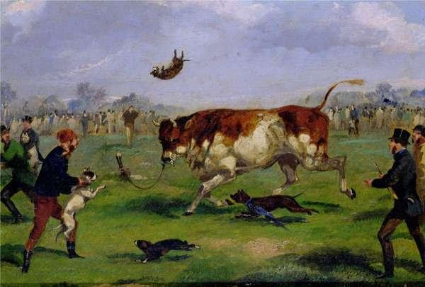 Современная история бульдогов
