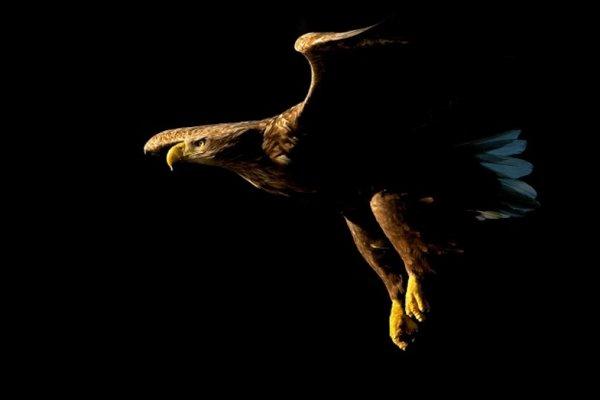 Искусственный орел
