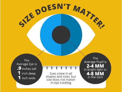 Глаза бывают всевозможных форм и размеров, но для айтрекинга размер не имеет значения