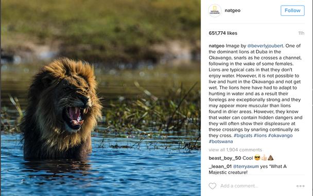Разнообразные хэштеги, в том числе #большиекошки и #ботсвана, помогают расширить аудиторию.