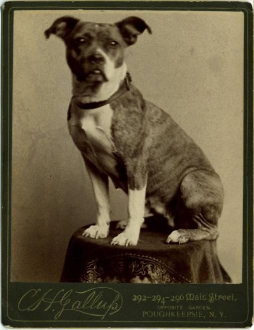 Рисунок 3 A-B: собаки или кошки: какое домашнее животное лучше?