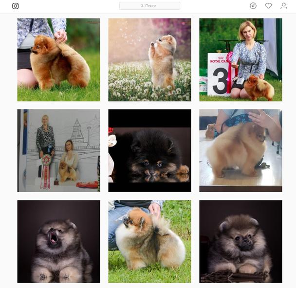 Все посты этого инстаграм-аккаунта посвящены собакам и мастерам груминга