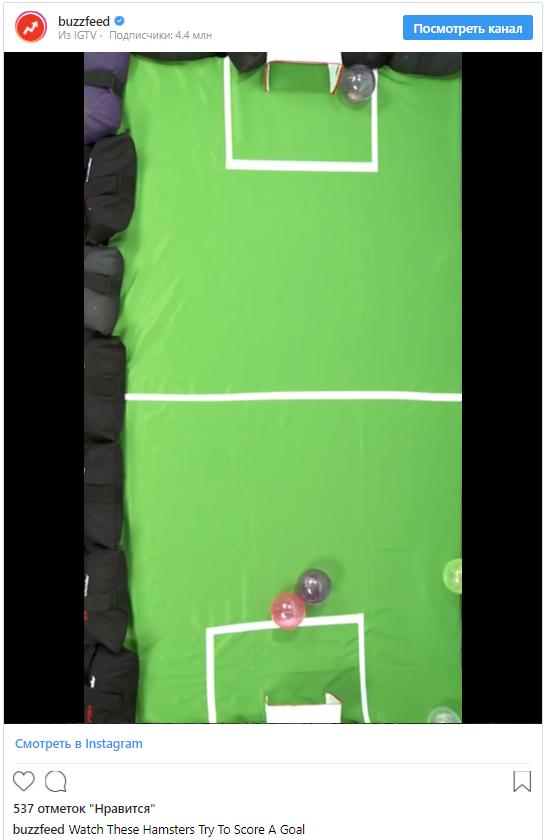 Комментарий от Buzzfeed: «Смотрите, как эти хомячки пытаются забить гол! Возможно, что победит самый симпатичный хомяк».