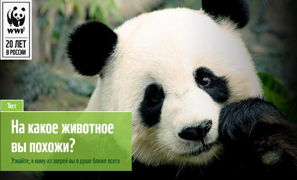 Знаменитая панда от WWF