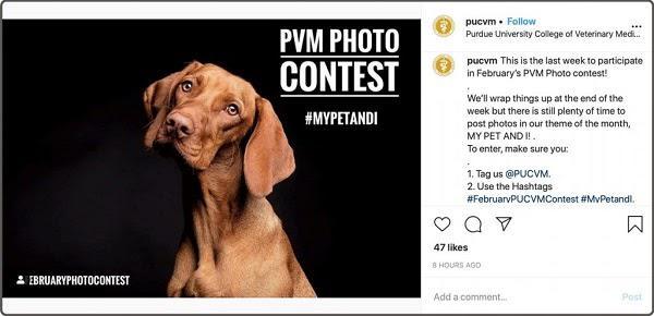 """Гивэвей от Purdue Veterinary Medicine: «Разместите фотографию на тему """"Мой питомец и я"""". Не забудьте отметить наш профиль и использовать указанные хэштеги.»"""
