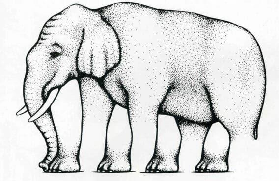 Сколько ног у слона? Три? Четыре? Пять?