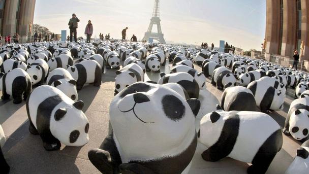 практически каждый человек, независимо от своих политических взглядов, может встать на защиту панд от исчезновения
